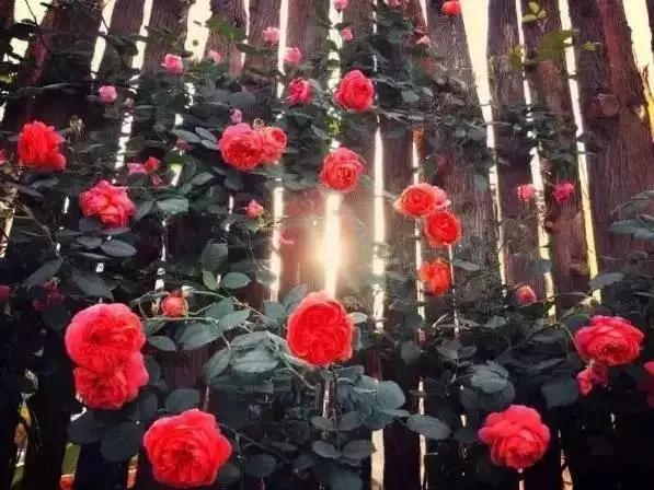 玫瑰主题民宿,让旅行与爱同行
