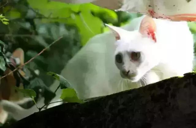 猫的伊甸园——深圳猫主题民宿喵小乐家